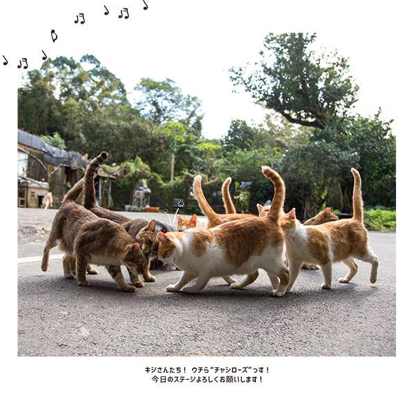 身体を擦り寄せて連帯感を表現する猫の集団 by 写真集『おどるネコうたうネコ』