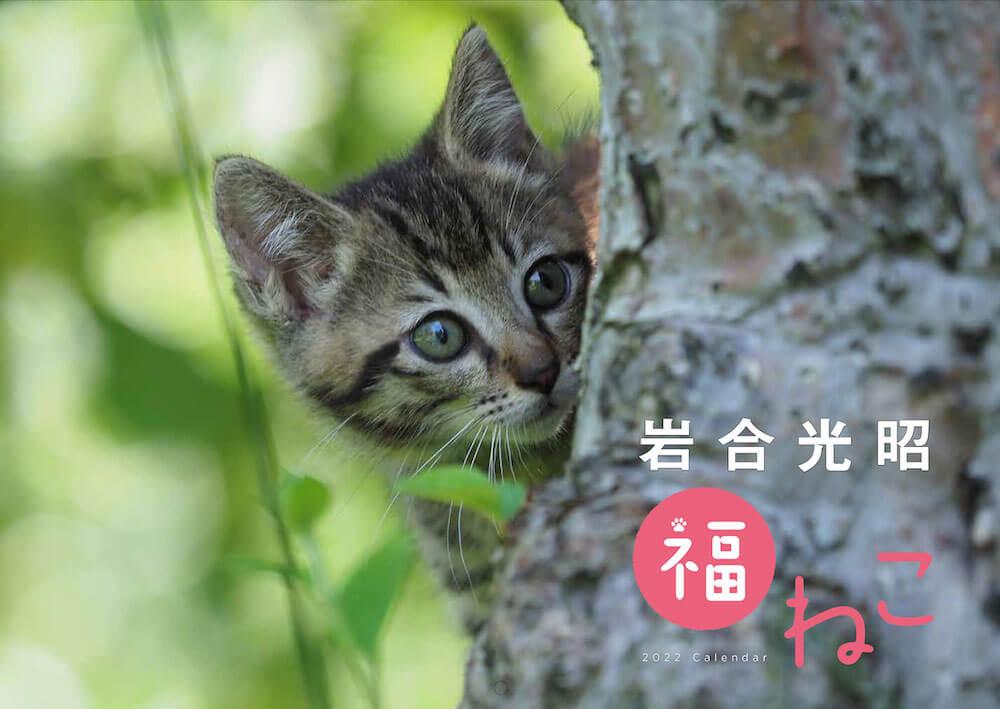 「岩合光昭 福ねこ2022 カレンダー」の表紙イメージ