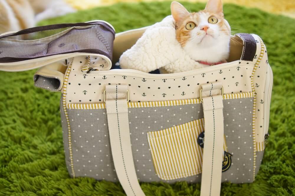 キャリーケースに入っている猫のイメージ写真