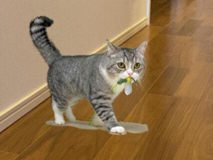 あのギネス猫が自宅に出現!?もちまる日記の新作カレンダーが登場、AR写真の特典付きニャ