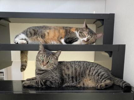 猫には階段がよく似合う♪ 猫と階段をテーマにした写真コンテスト「階段ねこンテスト」が開催中