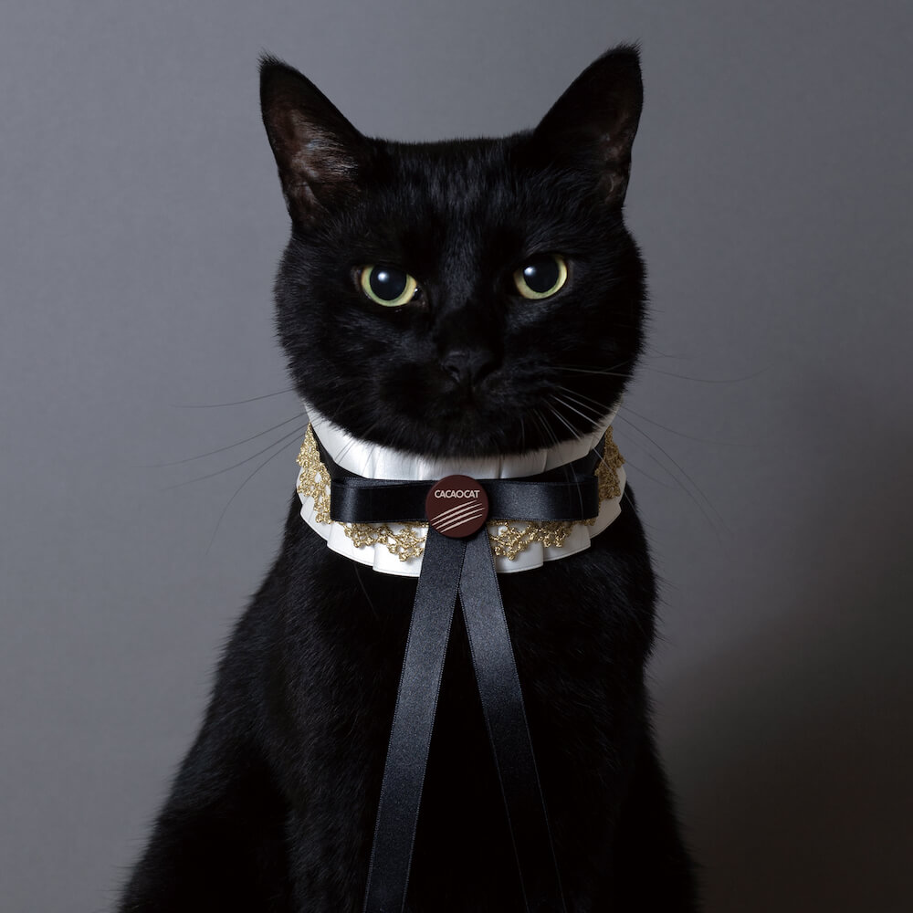 木野聡子がデザインしたCACAOCAT(カカオキャット)の黒猫アートワーク