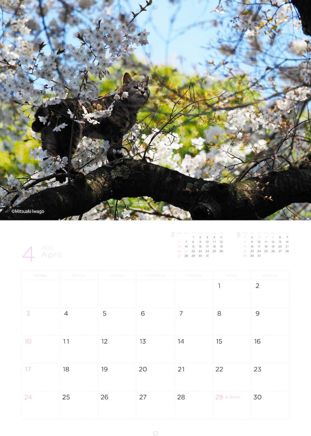 桜の木の上でお花見をする猫 by 岩合光昭カレンダー