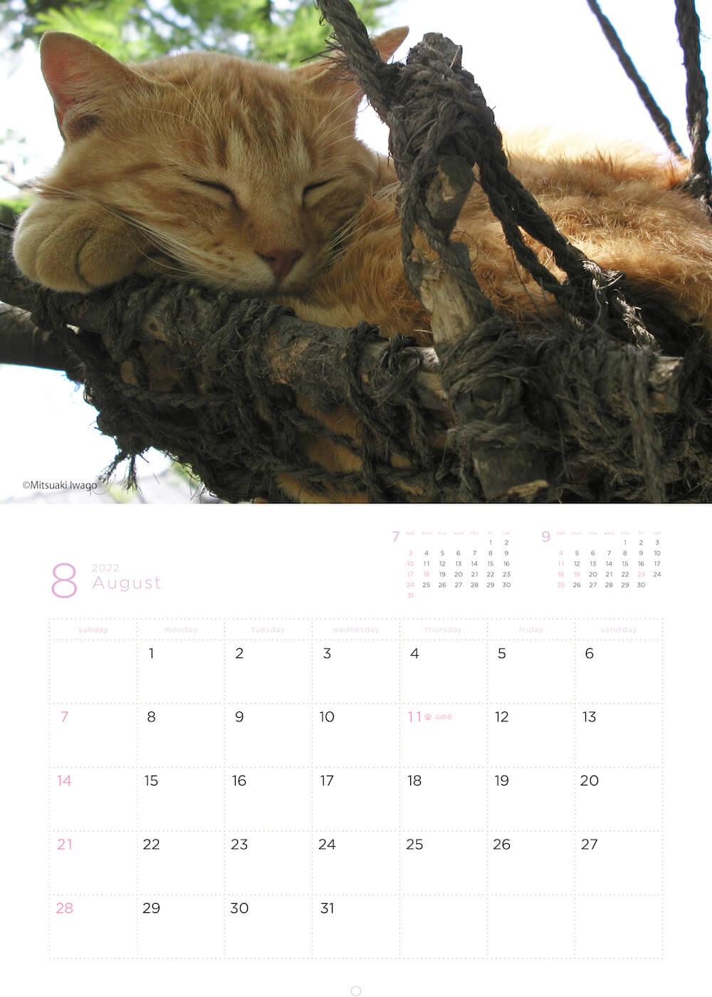 ハンモックに座って眠る猫 by 岩合光昭カレンダー
