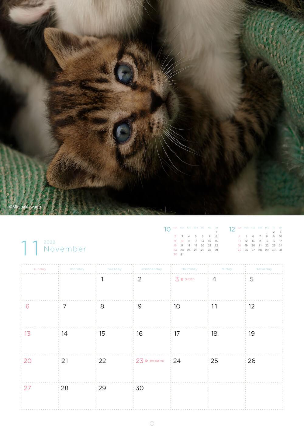 母猫の脚に巻き付く子猫 by 岩合光昭カレンダー