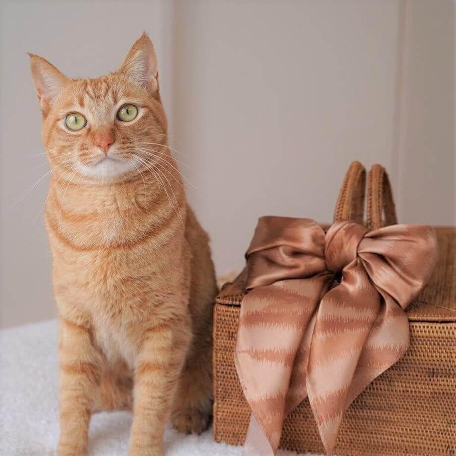 茶トラ猫と、茶トラ猫をイメージしたデザインのスカーフ
