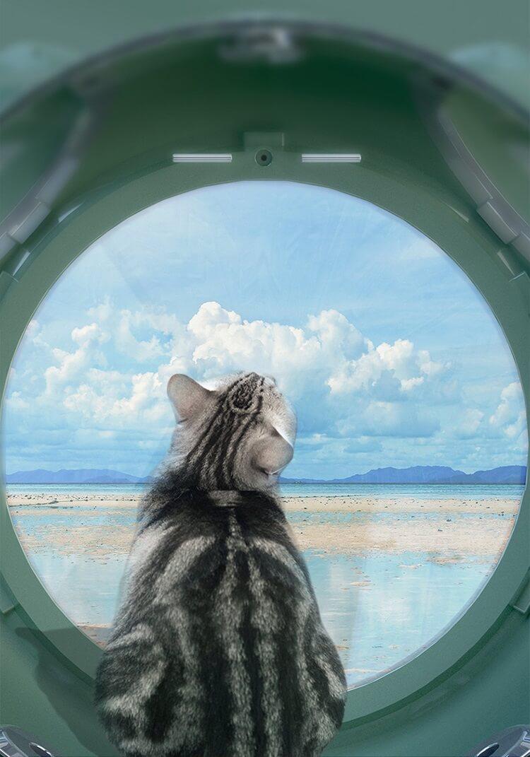 ペット用リュックキャリー「カプセルペット」の中の窓から見た外の景色