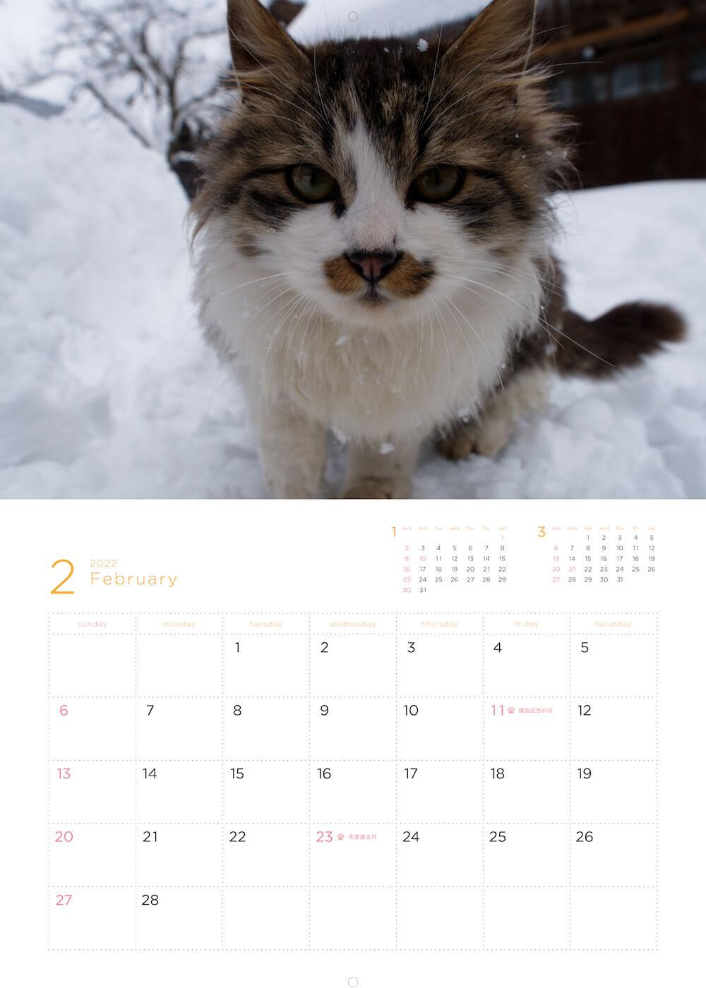 「岩合光昭 福ねこ2022 カレンダー」の2月のカレンダー実物イメージ