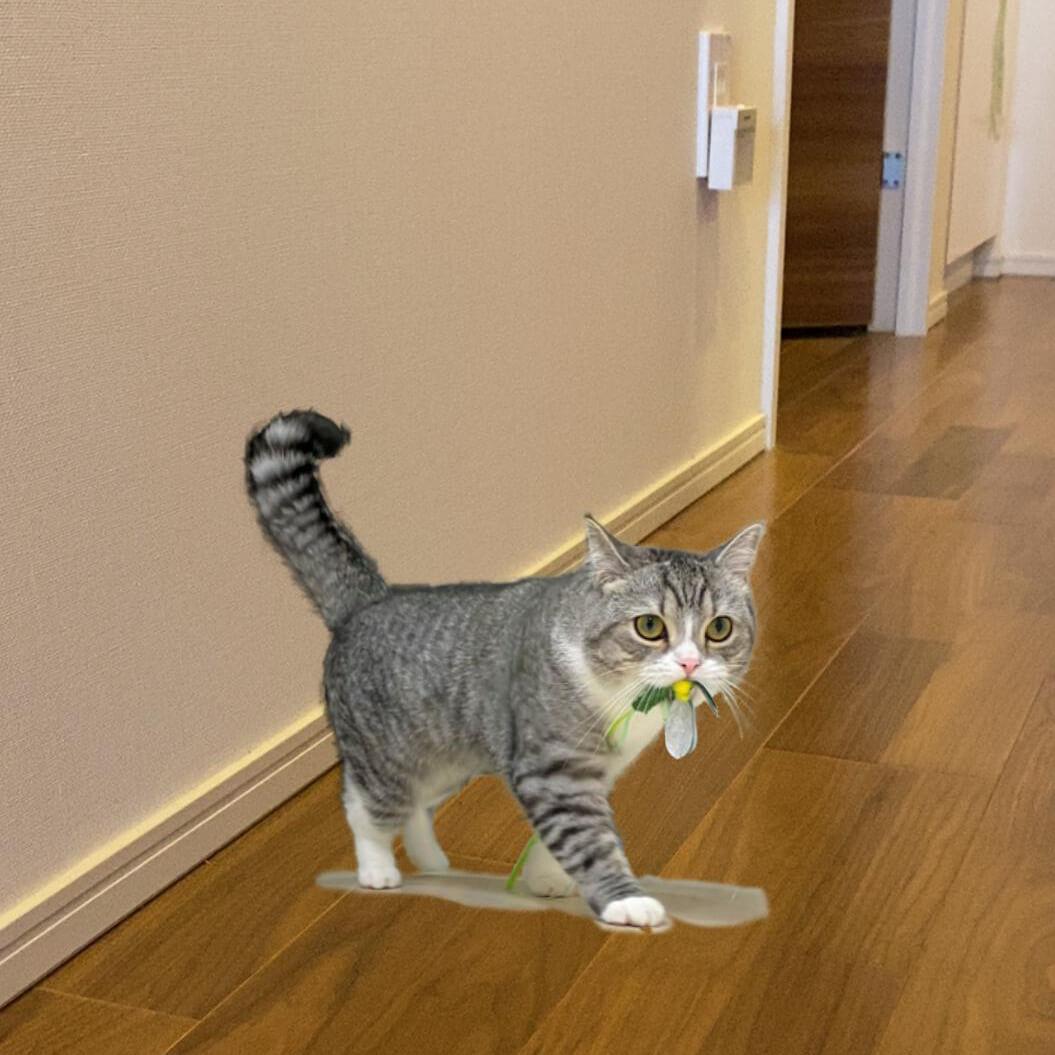 人気猫もちまるのAR写真